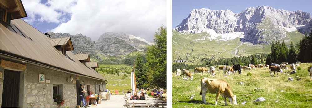 Snack facilities at the high altitude Montasio cattle station (1,700m) boasting lush pastures