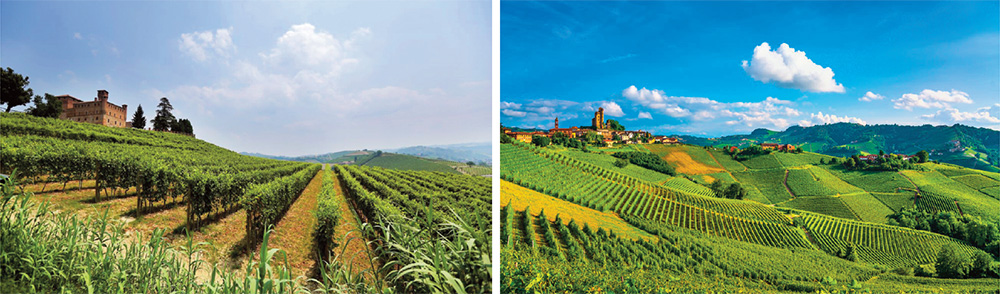 Piedmont Region - Vineyards and castles in the Langhe District